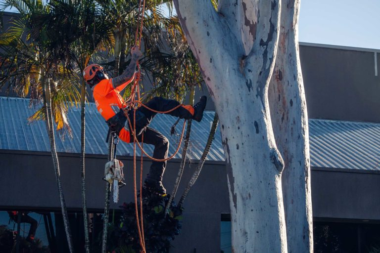 palm tree removal Fernhill